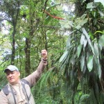 Exploring Monteverde Cloud Forest Treserve on guided hike